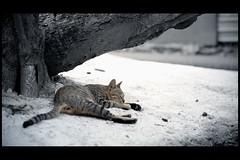 Snow(雪) (austinliula) Tags: snow cat nikon tainan 雪 台南 f4 vr 貓 安平 24120mm d700 platinumheartaward