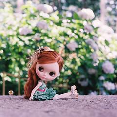 紫陽花は夏の季語。