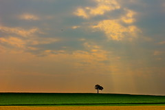 singular. (ang mcdougald photography) Tags: sky sun sunlight tree field leaves landscape one single lonely singular onetree flickrchallengegroup flickrchallengewinner