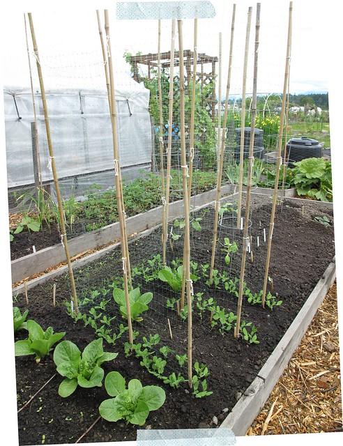 Garden During 2