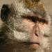 Cerca de 300 macacos vivem lá