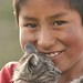 Gatinho de estimaçao - Lago Titicaca