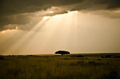 (Jimmy Jordan) Tags: africa sun tree grass clouds landscape kenya mara savannah acacia masai