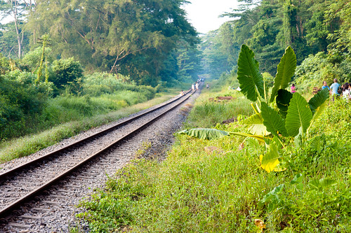 Our Lush green heritage along the rail corridor