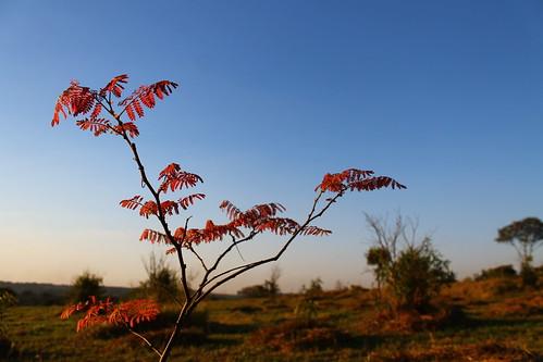 Pequenas folhas vermelhas