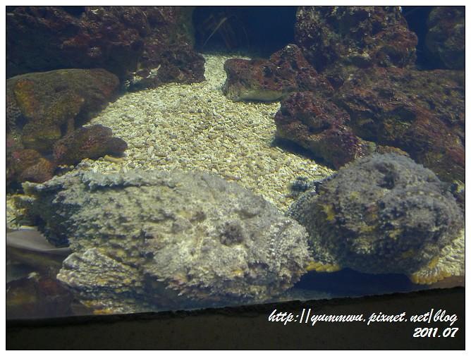 110711小丑魚主題館 (36)