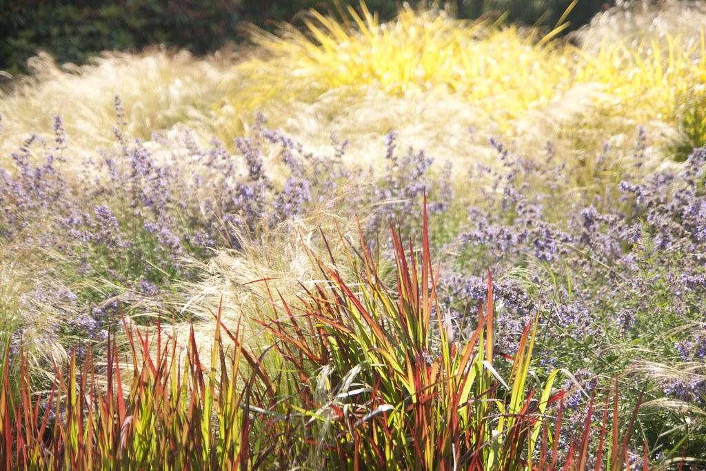 grassy patch 3