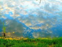 Clouds enjoying an early morning swim (peggyhr) Tags: blue light white lake canada grass yellow clouds reflections alberta lakeshore algae snag cattail lsky 25faves peggyhr bluebirdestates natureselegantshots vanagrammofontheoldgramophone 100commentgroup natureisallallisnature saariysqualitypictures bestpeopleschoice mygearandme flickrsportal lomejordemisamigos deadtreebranchtipsnaturep1020908ap