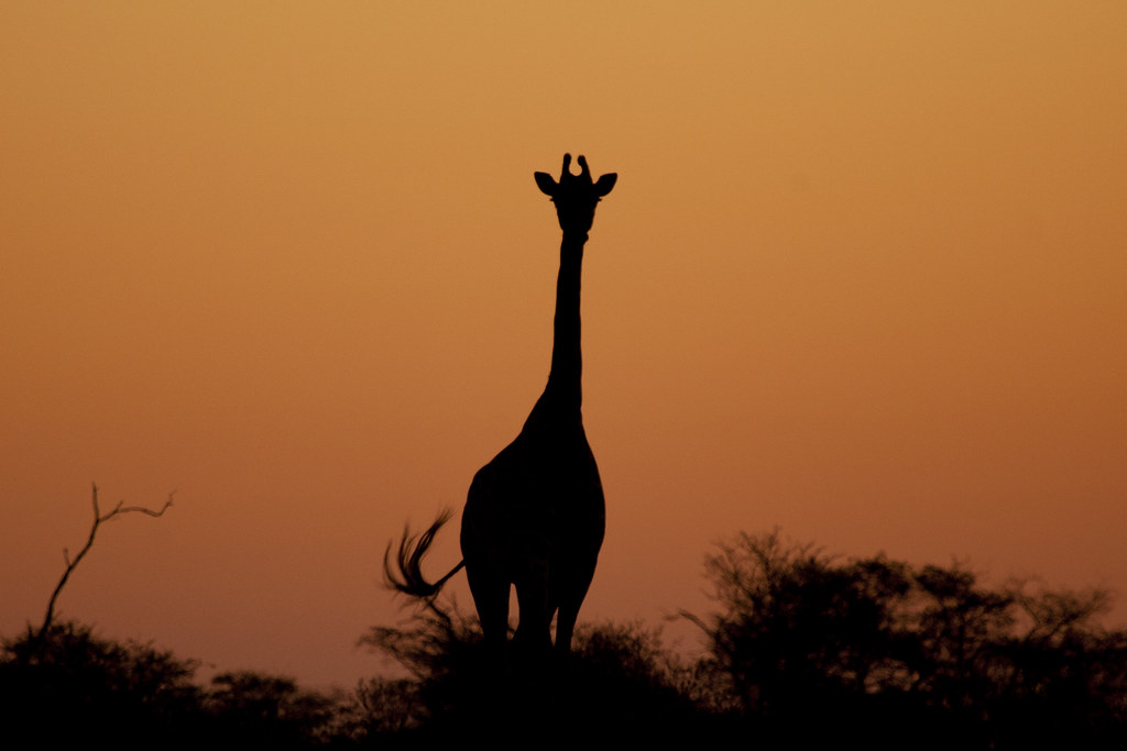 Foto Botswana - Safari in Botswana - Agosto 2018