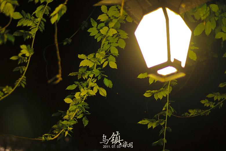 IMG_0991_1