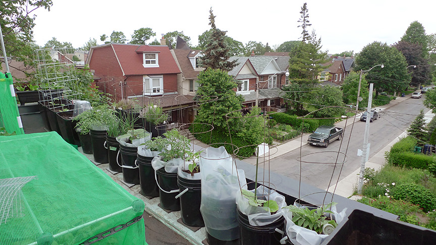 SIP planters along west side of roof