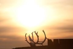 DSC_8407s (savillent) Tags: summer sky sun canada nikon northwestterritories 2011 tuktoyaktuk d300s