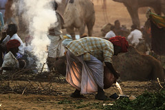 Pushkar fair (Tito Dalmau) Tags: india fair camel pushkar rajasthan