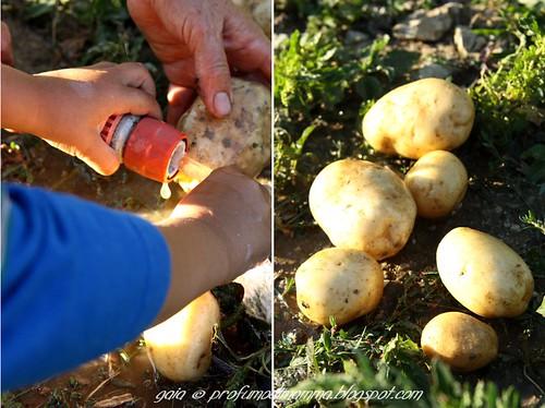 Lavaggio patate