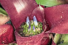 Alien World (BrianMoranHDR) Tags: flower macro sanantonio texas flash dxo sanantoniobotanicalgarden hdrsoft topazlabs canon60d niksoftware canonmr14ex colorefexpro3 viveza2 canon100mmf28l adobephotoshopcs5extended denoise5 silverefexpro2 photomatixpro402 opticspro6