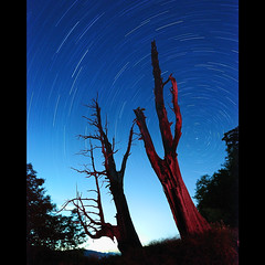 () Tags: night star taiwan     startrails        chamaecyparisformosensis