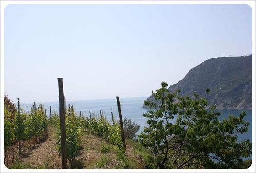 Cinque Terre vineyard & Mediterranean sea