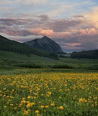 crested butte mountain (wishiwsthr) Tags: colorado meadow rockymountains wildflowers crestedbutte crestedbuttemountain wishiwsthr