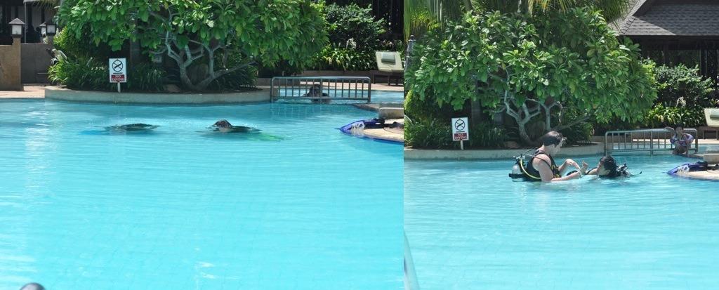 Phi Phi Island Weather July
