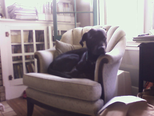Flynn in the chair