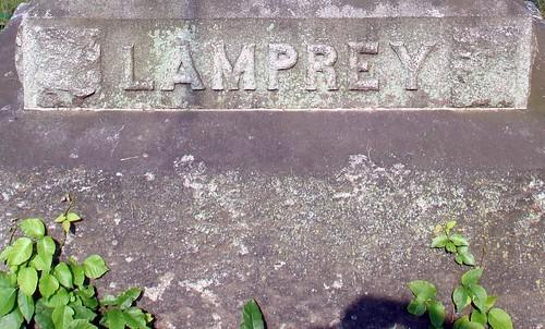 Lamprey by midgefrazel