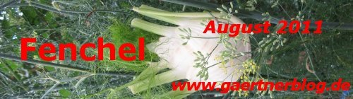 Garten-Koch-Event August 2011: Fenchel  [31.08.2011]