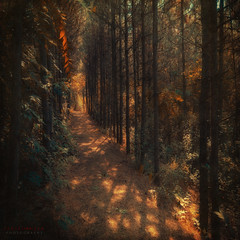 the light makes the mystery (ildikoneer) Tags: trees light texture leaves sunshine pine forest canon eos leaf hungary path budapest mm 1020 digitalcameraclub ps5 40d trkblint colorphotoaward magicunicornverybest
