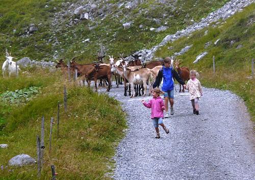 Les enfants avec les chèvres 009