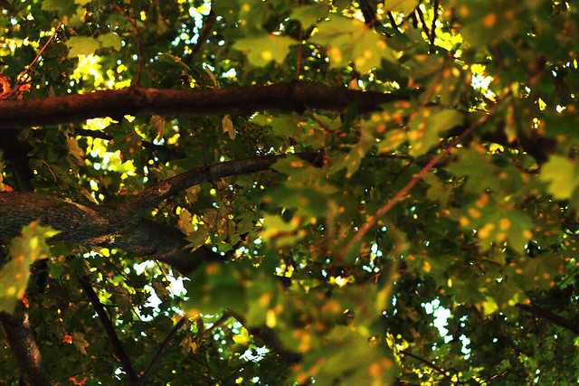 Day 345 - Branches and Leaves