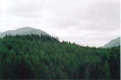 (hazel.jane) Tags: film nature 35mm pentax fortwilliam