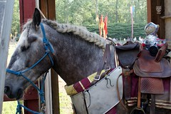 Day 167 - Ready For The Joust 01