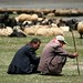 Pastores turcos