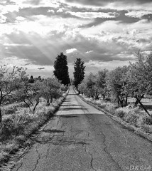 Typical Tuscan Road (Dennis Cluth) Tags: road italy florence olive lane tuscany groves antella
