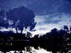 Blue reflection (markb120) Tags: blue sky reflection tree water pool night sunrise greece ellada kamena vourla