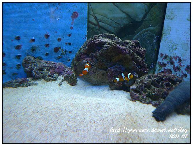 110711小丑魚主題館 (10)