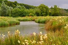 Arundel Wetlands Trust (soulman53) Tags: uk england nature river reeds sussex july arundel wwt arundelwwt