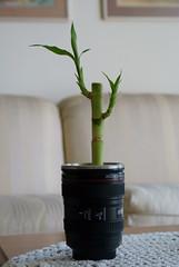 This happens when you don't use your lens (danielito311) Tags: sony bamboo mug alpha taza luckybamboo photojojo sonyalpha sonyalpha200 sonyalphadslra200 sonyalphadslr200 canonmug cameralensmug