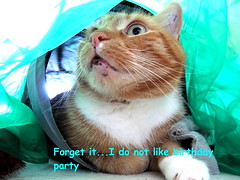 Birthday (Andylinchen) Tags: birthday party home animal cat canon friend natur taco
