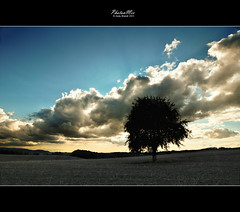 Passing Through / Onset of Sunset (Andy Brandl (PhotonMix.com)) Tags: blue sky cloud tree nature field clouds landscape nikon bluesky 12mm lonetree earlysunset cloudbank flickrduel photonmix