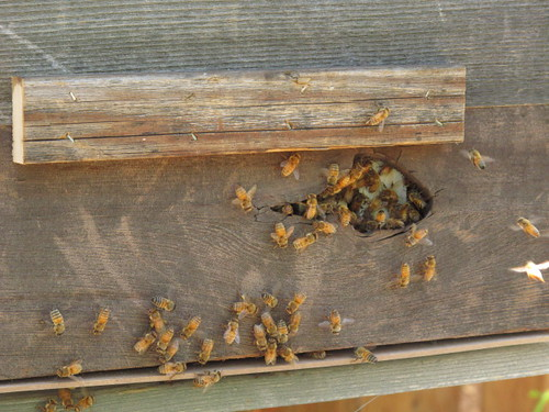 The bees seem to dig it