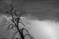 Lightning Tree Silhouette 38 Black and White (Striking Photography by Bo Insogna) Tags: tree trees branches silhouette bouldercounty boulder co colorado longmont lafayette louisville lightning lightening thunderstorms storms unusuallightning lighning lightningboltpictures lightningstrike striking lightningbolts landscapes nature lightningweatherstockimages wallart photography weather sky skyscape monsoon rain bluesky clouds landscape timedexposure jamesboinsogna strikingphotography thelightningman strikingimages fineartprintsforsale forsale canvasartforsale bw black white blackwhite anawesomeshot