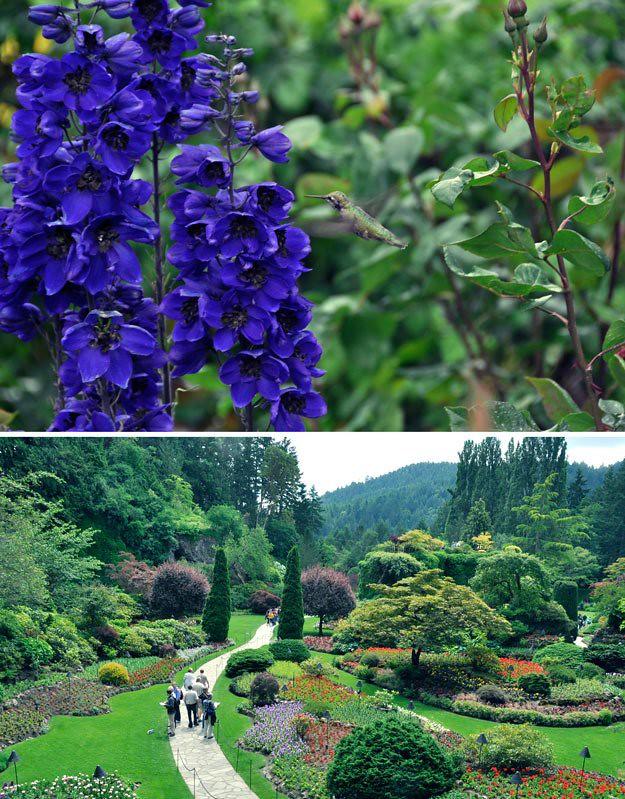 Butchart-gardens-5