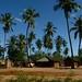 Os coqueiros, que sugerem sombra e agua fresca