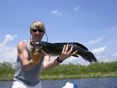 "Record Bowfin • <a style=""font-size:0.8em;"" href=""http://www.flickr.com/photos/63845265@N04/5966513329/"" target=""_blank"">View on Flickr</a>"