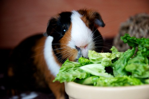 Actually, I prefer lettuce... by Pewari