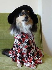 """Red flowery dress & black hat • <a style=""""font-size:0.8em;"""" href=""""http://www.flickr.com/photos/55880040@N05/5967788432/"""" target=""""_blank"""">View on Flickr</a>"""