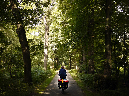 Riding through a sunlit woods
