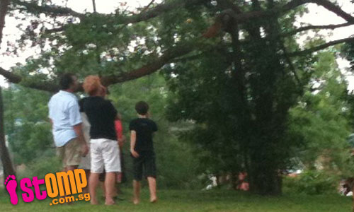Passers-by distracted by swinging monkey near Woodleigh MRT station