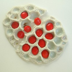 oops.... (c-urchin) Tags: texture broken ceramic blood oops bone porcelain