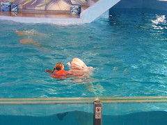 IMG_4746 (dolphingirl0609) Tags: world sea camp san texas dolphin lion seal killer whale orca beluga antonio advanced career